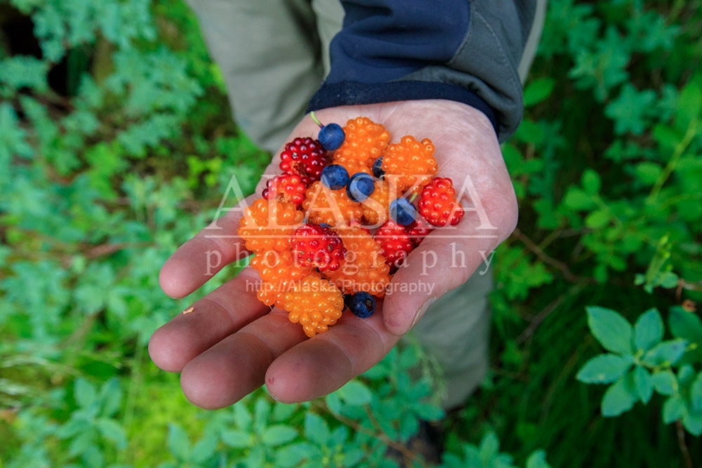 Salmonberries and blueberries.