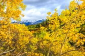 Autumn in the Chugach Along the TAPS