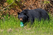 Bear With the Soda Bottle