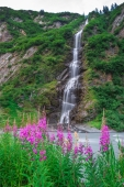 Bridal Veil and Fireweed