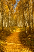 Follow the Yellow Leaf Trail