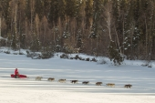 Jan Steves on the 2015 Iditarod Trail