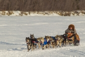 Jeff King 2015 Iditarod