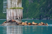 Middle Rock Sea Lion Colony