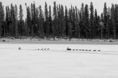 The Iditarod Chase