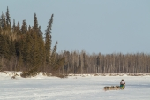 Wilmshurst Races the 2015 Iditarod