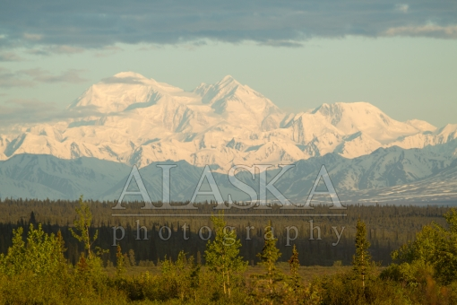 Denali Morning View