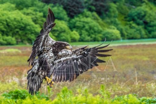 Eagle Air Brakes