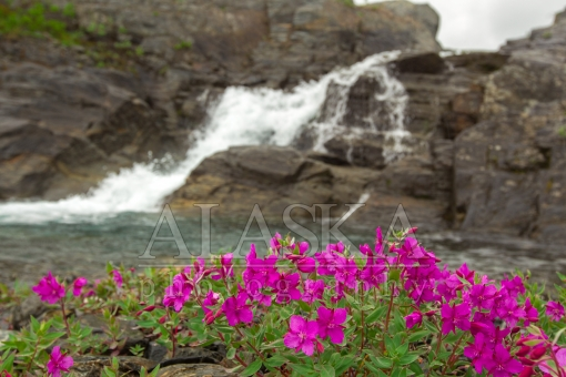 Flowers by the Falls