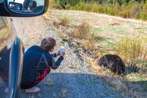 Roadside Bear Photographer