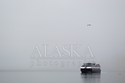 Seagull Ferry Fog and Log