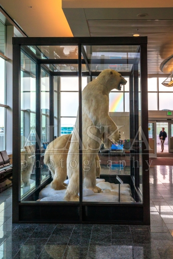 Stevens Rainbow Polar Bears on Display
