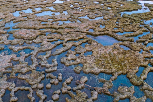 Wetland Pools in the Tidal Flats